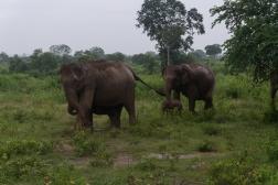 Sri Lanka-6